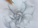 Botanical Drawing:  Silver Point