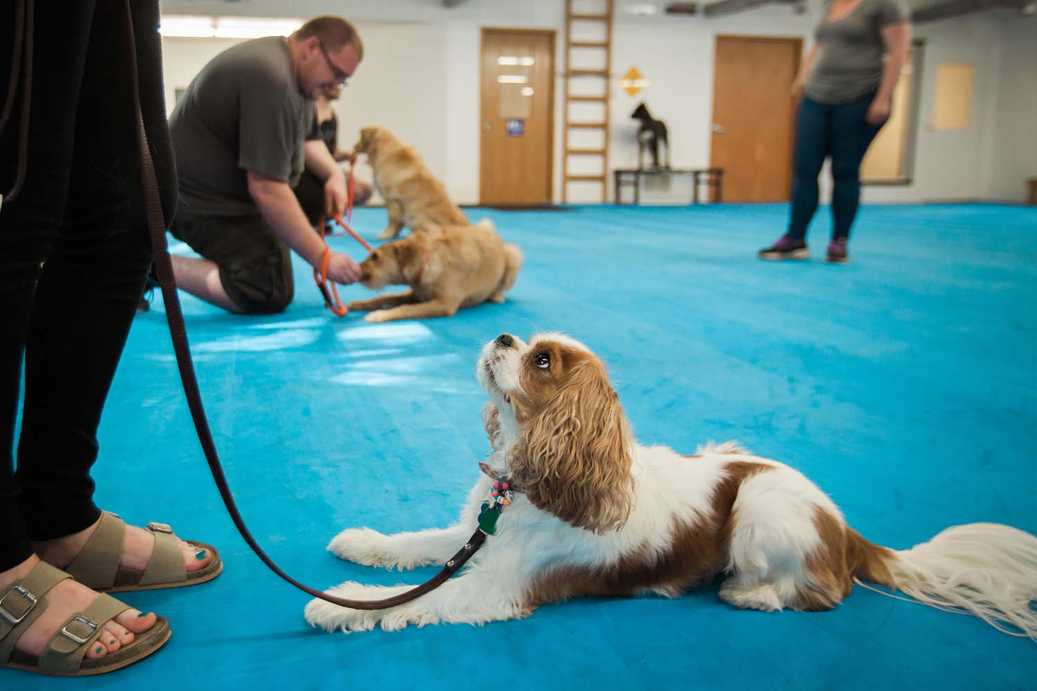 PUPPY TRAINING/GOOD MANNERS CLASS (spring)