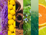 502F17 Beyond the Basics of Essential Oils