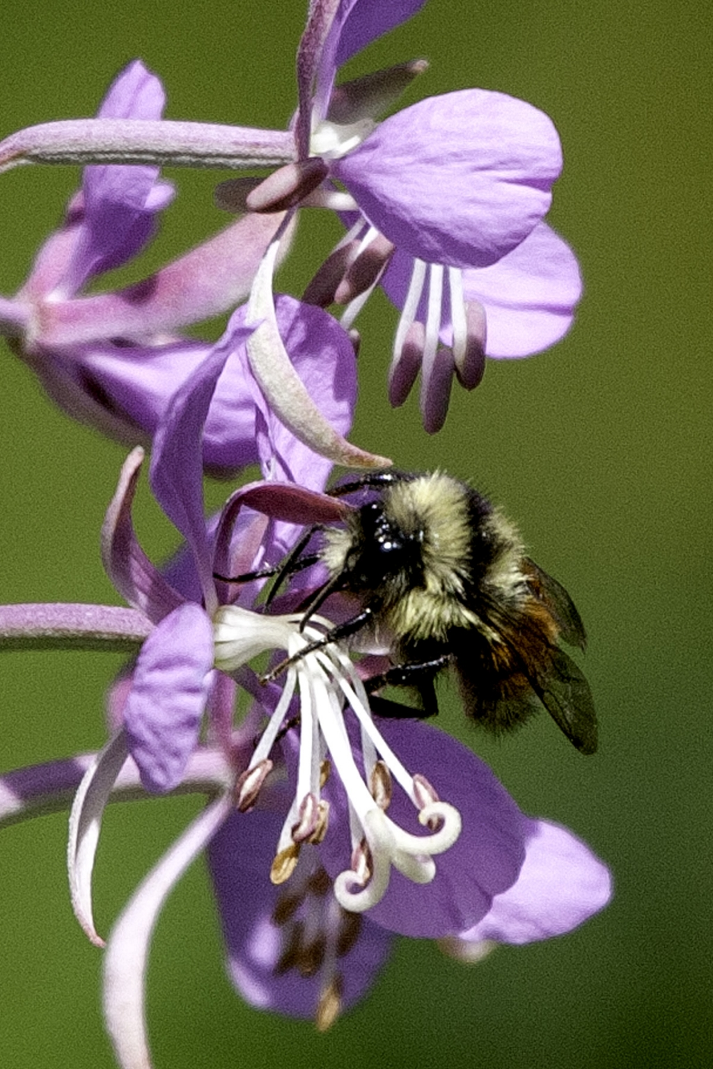 Macro Photography and Bees