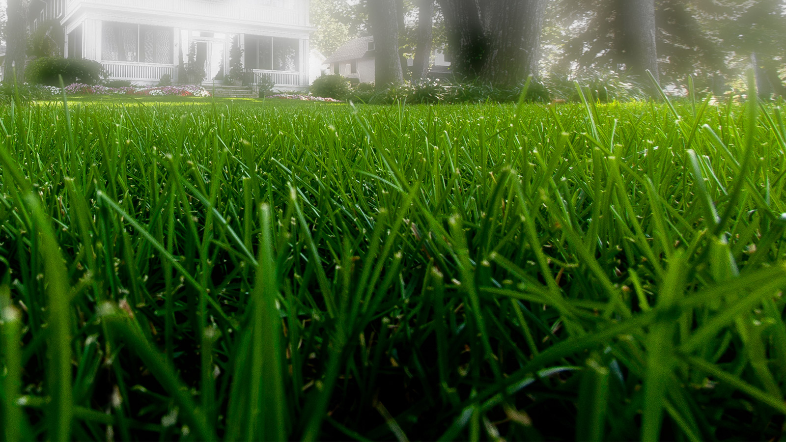 Healthy Maine Lawns Made Easy