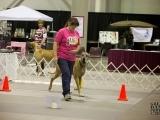 Dog Obedience: Advanced