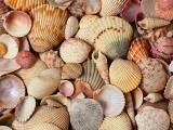 Drawing Night: Sea Shells
