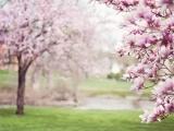 Lily & Vine Floral Design - Signs of Spring (Online)