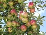 Growing Your Own Fruit Trees