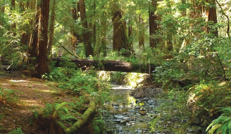 Ten Ways to Improve Your Woodland for Wildlife