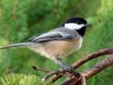 Basic Bird-Watching