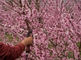 Tree Care & Pruning