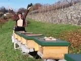 Natural Beekeeping Using Top Bar Hives - A Weekend Intensive