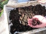 Worm Composting Free Alumni Harvest Night June W20