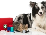 702S20 Pet First Aid and Common Vet Emergencies