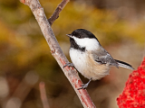 Birding Basics: Identifying Birds