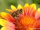 Beekeeping - Beginners