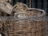 Invasive Bittersweet Baskets
