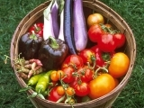 Grow Your Own Organic Garden! W18