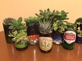 Beer Glass Succulent Garden