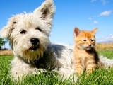 Using Essential Oils for Pets