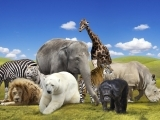 THEMED GAMES AND CRAFTS - 'ANIMALS, ANIMALS'