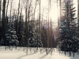 Nature Writing: Winter in the North