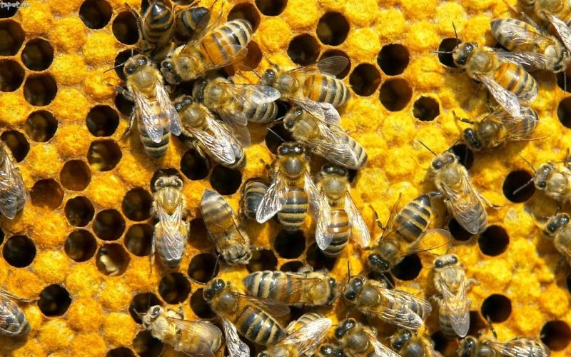 Original source: http://ruralfriendskenya.com/wp-content/uploads/2012/11/bees.jpg
