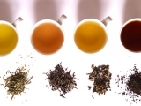 Discover Tea - An Introduction to Tea Session 1
