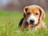 Essential Pet Care