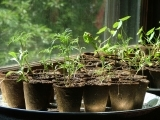 Gardening: Grow Your Own! Seed Starting