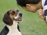 Polite Greetings - Dogs