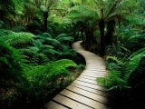 Original source: http://fullhdpictures.com/wp-content/uploads/2015/12/Wooden-Pathway-HD-Wallpaper.jpg