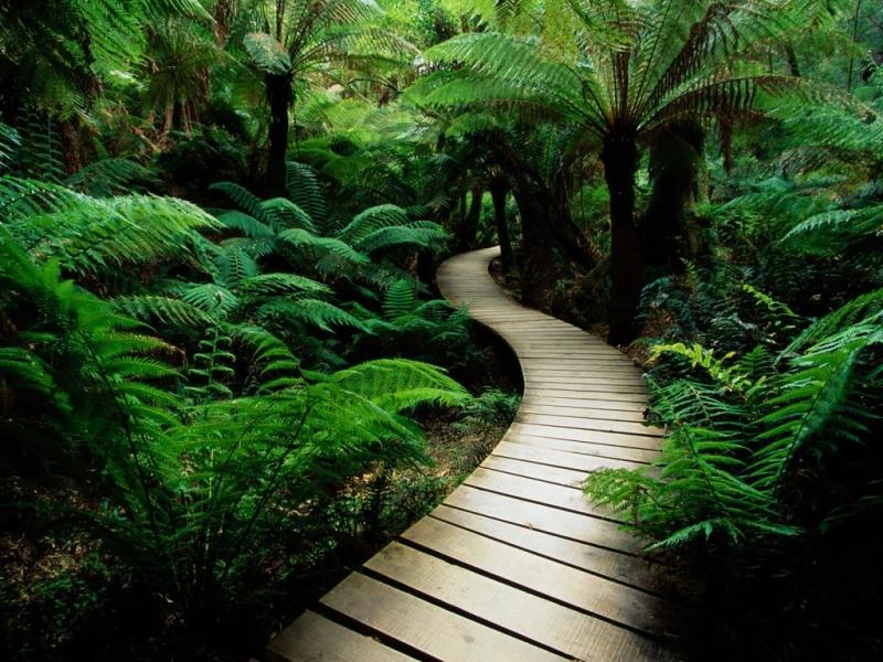 Original source: http://fullhdpictures.com/wp-content/uploads/2015/12/Wooden-Pathway-HD-Wallpaper.jpg