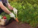 Original source: https://expertbeacon.com/sites/default/files/how_to_start_your_first_vegetable_garden_and_grow_your_own_vegetables.jpg