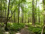 Field Botany: Tree Walk