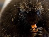 Speaker Series: Wildlife 911 with Live Animals