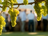 Chardonnays from Around the World