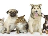 Basics of Intuitive Animal Communication - Southbury