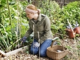 Grow Your Own Organic Garden!  Learn the Basics!