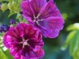 Edible & Medicinal Plant Walk