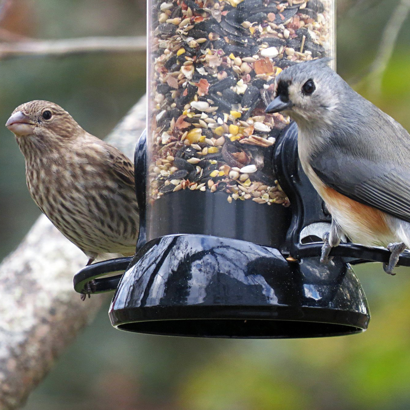 Bird Feeding Basics: Spring Edition