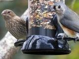Bird Feeding Basics: Spring Edition