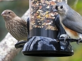 Bird Feeding Basics: Fall Edition