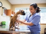 Animal Health Care - Presidio Campus