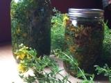 Herbal Apprenticeship