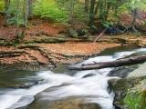Life Like a River