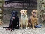 AKC Canine Good Citizen Prep Class