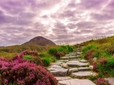 Lily & Vine - The Belles of Ireland - Torrington
