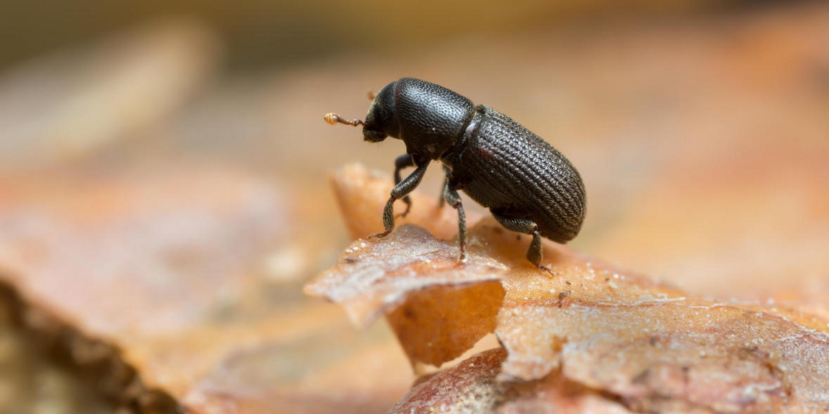 Memorable Forest Insects