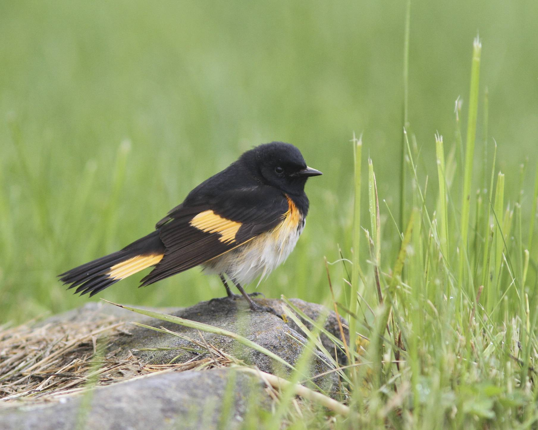 Bird Walk at Fort Williams