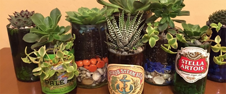 Beer Glass Succulent Gardens