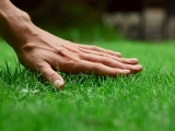 YardScape: Healthy Lawn Care Made Simple - Spring 2018