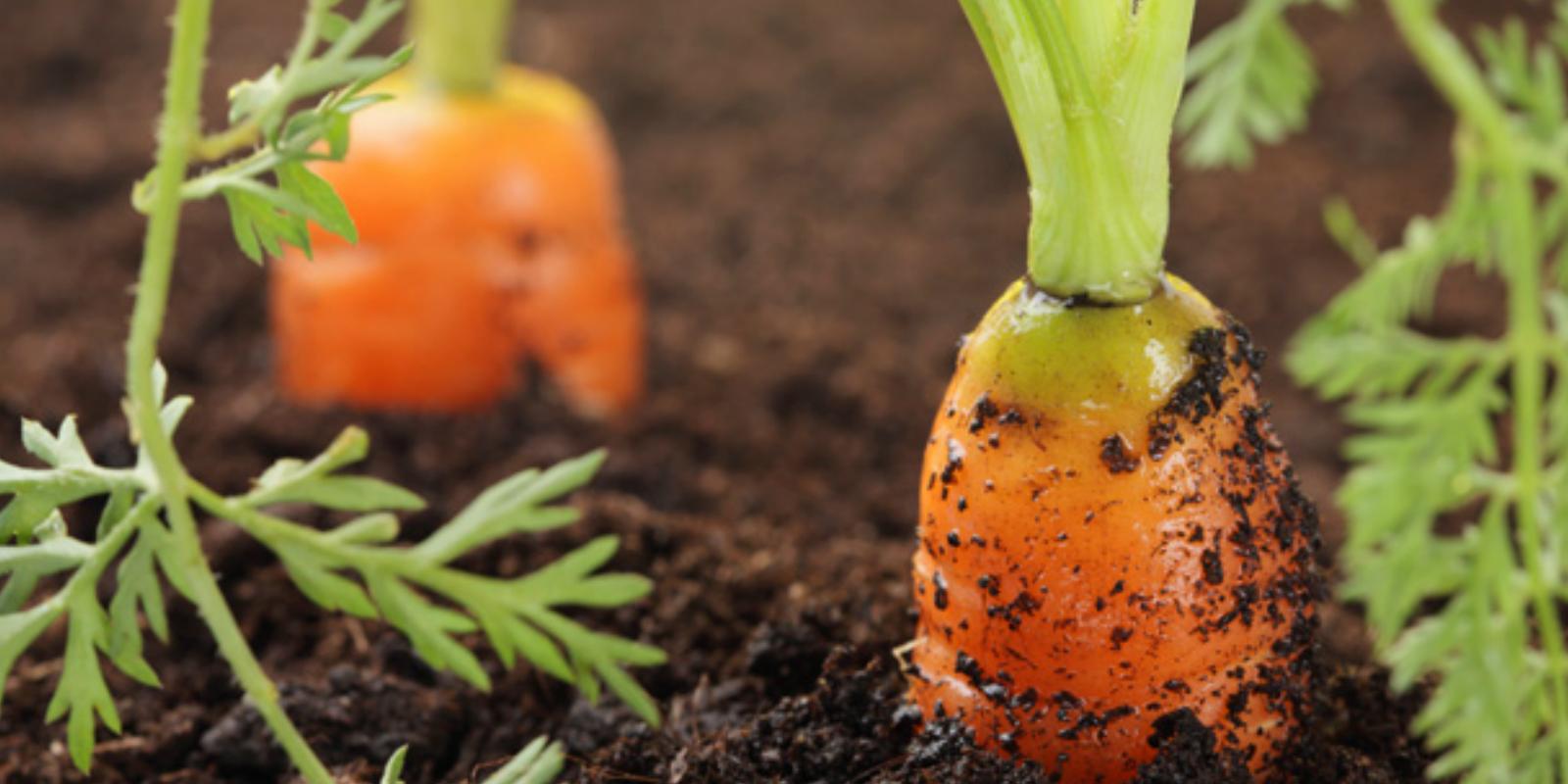 Grow Your Own Organic Garden!